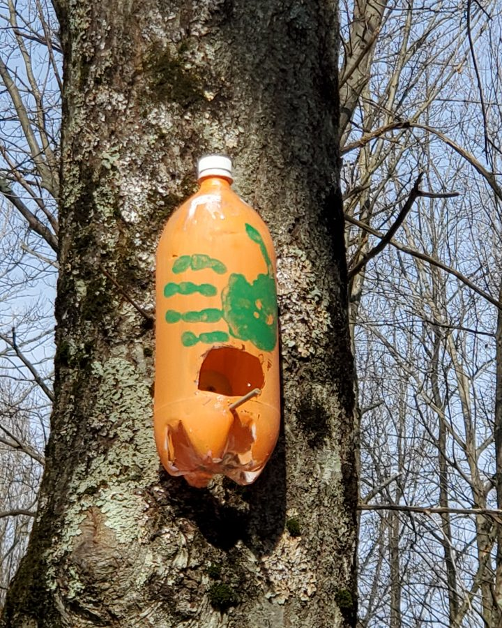 upcycled plastic bottle diy birdhouse